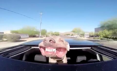 N�r bilen blir for varm vet hunden Pilly hva den skal gj�re �