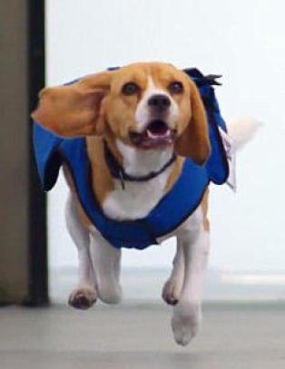 Ikke glem igjen mobilen din p� flyplassen for � f� m�te hunden Sherlock