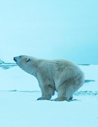 På ruglete is