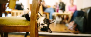 Le Caf� des Chats' tilbyr gjestene sine myk pels til maten
