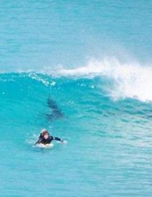 - Folk skrek og bilene tutet for � f� surferne opp av vannet