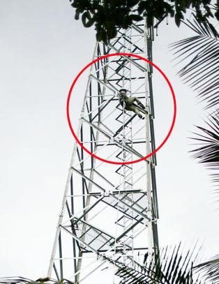 Her klatrer en burmesisk arbeider usikret i 40 meter høy Telenor-mast