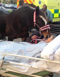 Her tar Sheila (77) et siste farvel med hesten Bronwen (25)
