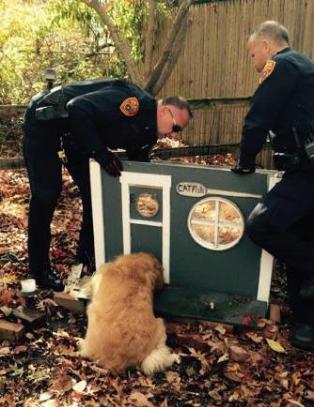 Det tok tre politifolk, brekkjern og hammer for � f� Buddy ut fra katted�ra
