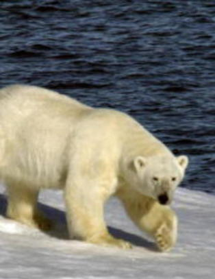 Overv�king av Arktis videref�res