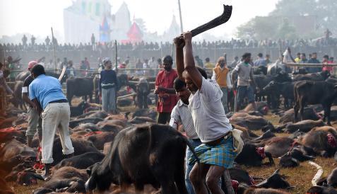 - 500 000 dyr ofres i l�pet av noen dager