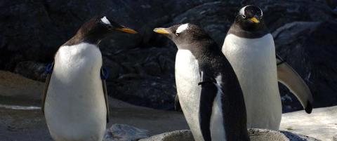 19 ansatte klager p� d�rlig dyrevelferd ved Akvariet i Bergen