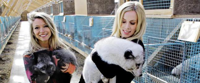 Dagbladet mener: Prisen dyrene betaler, er for h�y