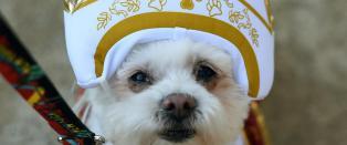 Paven �pner perleporten for hunder