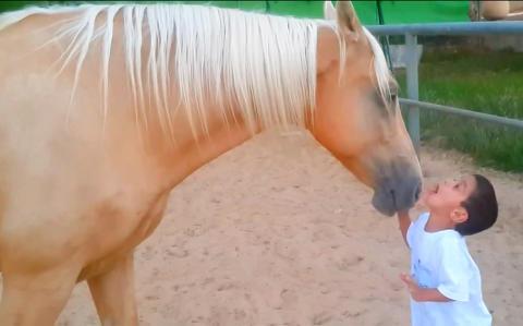 Erez har problemer med � snakke med mennesker, men n�r han m�ter denne hesten skjer noe magisk