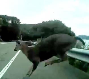Her kolliderer syklisten med en hjort i 45 km/t