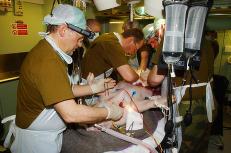 Forsvaret fikk nei til � skade griser under f�rstehjelps-�velse