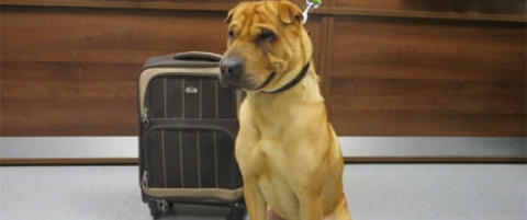 Hunden Kai (2) ble funnet p� en jernbanestasjon i Skottland. Ved siden av ham sto det en koffert