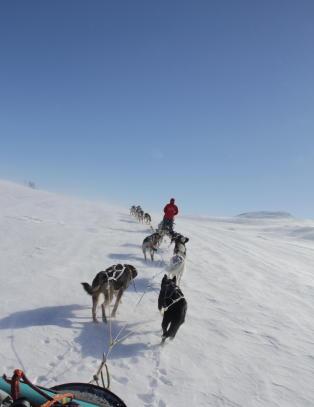 Glem kladding og bakglatte ski - vinterfjellet blir enda finere bak et hundespann