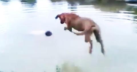 Slik reagerer hunden n�r den tror matfar drukner