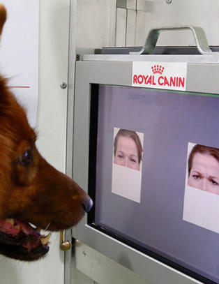S� lett avsl�rer hunden hum�ret ditt