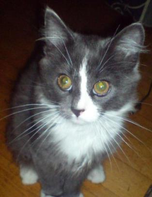 Katten Tor Kristian var to �r da han forsvant. N� har han kommet til rette - seks �r senere