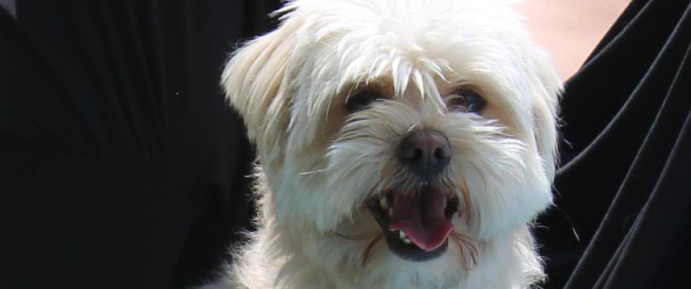 D�mt til seks m�neders fengsel for hundedrap