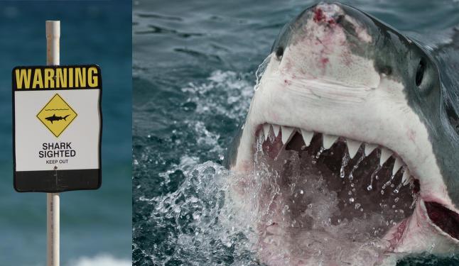 Turistene r�mmer med en gang haien dukker opp  i Australia