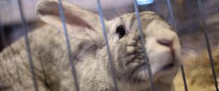 Frykter marihuana-avhengige kaniner i Utah
