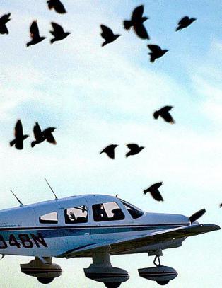 Derfor klarer ikke fugler � unng� kollisjoner med fly eller biler