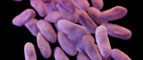 Slik skal amerikanerne bekjempe den d�delige superbakterien de selv har skapt