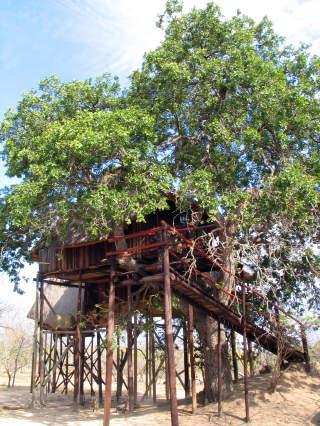 KOMFORTABELT: Selv om du bor i et tre, er hyttene store og har b�de vann og str�m. Dessuten kan det v�re behagelig luftig i h�yden.