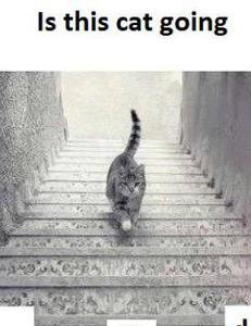 Glem �The dress�: G�r denne katta opp eller ned trappa?