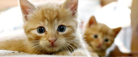 Amerikansk veterin�r drepte katt med pil og bue