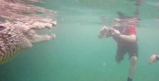 Guiden sa at kroko�dillen var vennlig. Da kastet turistene seg i vannet