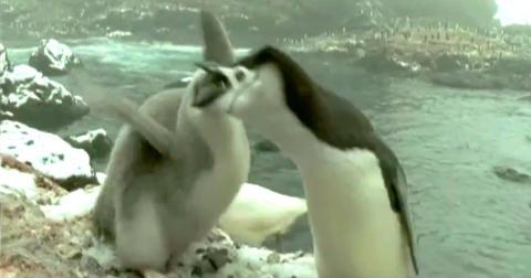 N�r den plagsomme m�ken kommer blir Pingu satt ut av spill