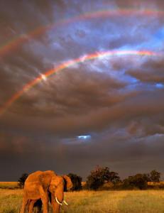Krypskyttere har drept halvparten av Mosambiks elefanter