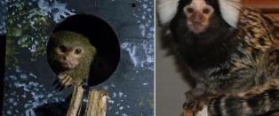 To aper stj�let fra reptilpark i Oslo: - N�r de er alene kommer de til � d�