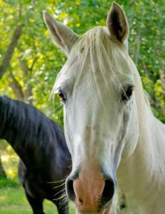 Mattilsynet gjorde tilsyn, ber om at tolv hester avlives