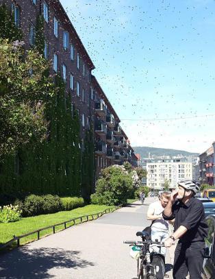 Folk stakk da bisvermen slo seg ned midt i Oslo