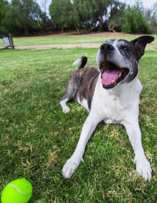 39 usanne dyremyter: Nei, et menneske�r er ikke sju hunde�r