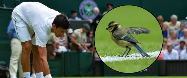 Verdens beste tennisspiller overbevist om at denne fuglen kom for � hjelpe ham