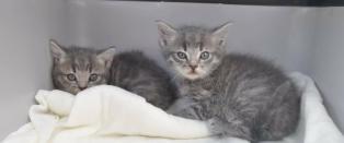 Disse kattungene ble funnet i en s�ppelkasse