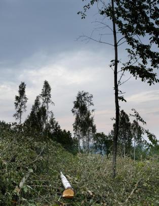 Nabo innrømmer: - Jeg felte kronprinsparets trær