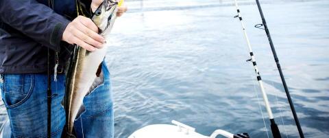 Her f�r du garantert fisk i sommer