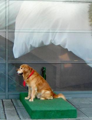 Har l�st problemet med hunder i glovarme biler
