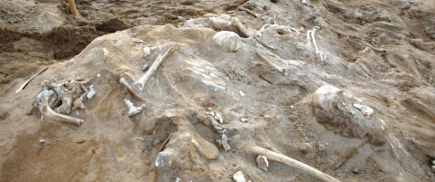 Mysteriet i massegraven l�st etter 200 �r: Slik d�de de 3000 soldatene til Napoleon