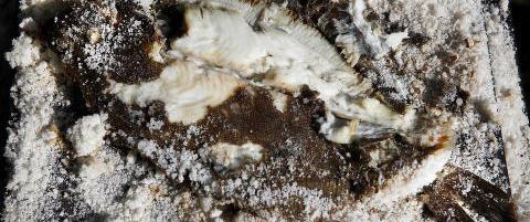 Saltbaking: Teknikken som strider mot alt du har l�rt