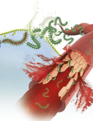 Ny vaksine kan gi fullstendig beskyttelse mot ebola