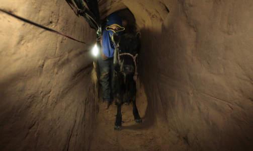 SMUGLERRUTA: En palestinsk mann dytter en kalv gjennom den underjordiske hemmelige tunnelen under grensa mellom Gaza og Egypt. Foto: Mohammed Salem