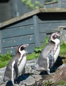 Pingvin-sak mot russ i �lesund er henlagt