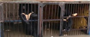 Rystende bilder fra dyrepark der bj�rner kjemper for livene. Eieren har rotet bort n�klene