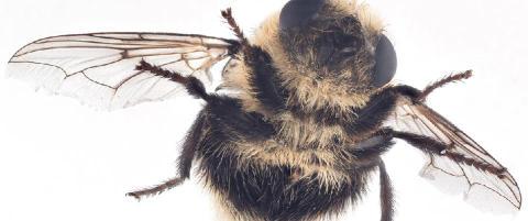 Denne rakkeren fyrer av larver som en mitralj�se mot �ynene dine
