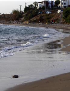 Uansett hva jeg skrev dukket bildene fra den tyrkiske stranda opp