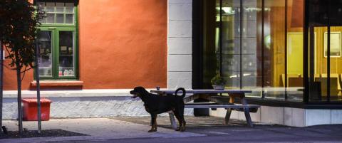 - Denne typen situasjoner kan utl�se hunders instinkt til � forsvare seg selv og sin eier